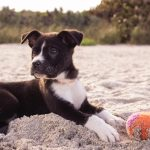 10 Apps Every Dog Owner Should Have